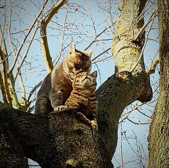 Love Lovelycat Turkeycat Catwedding Sweetcat Followme
