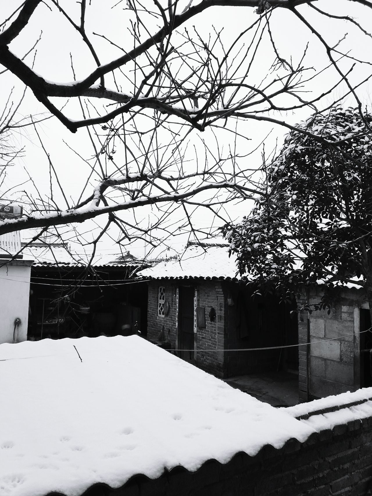 下雪后的小院 Tree Outdoors Nature Contryhouse