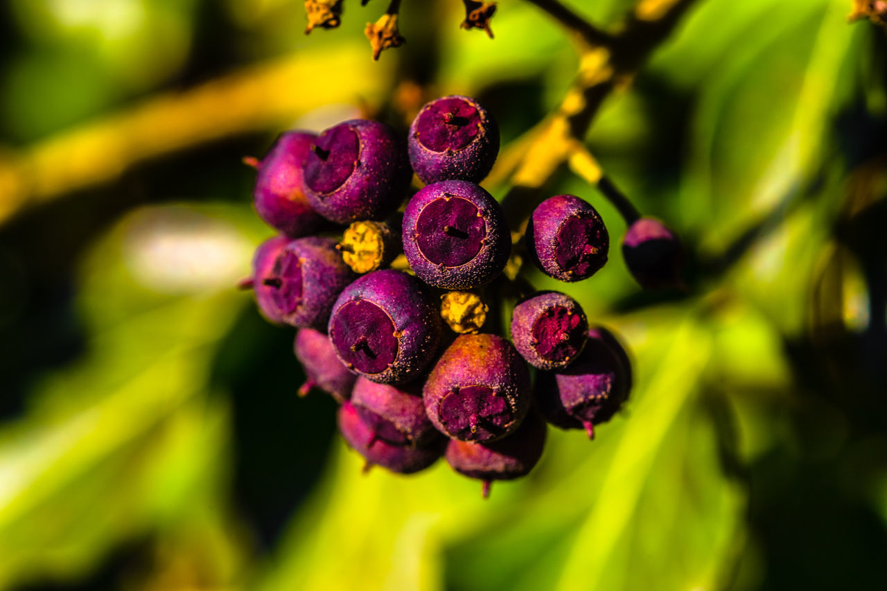 purple, nature, growth, freshness, beauty in nature, flower, selective focus, plant, green color, healthy eating, no people, outdoors, day, close-up, fragility, flower head