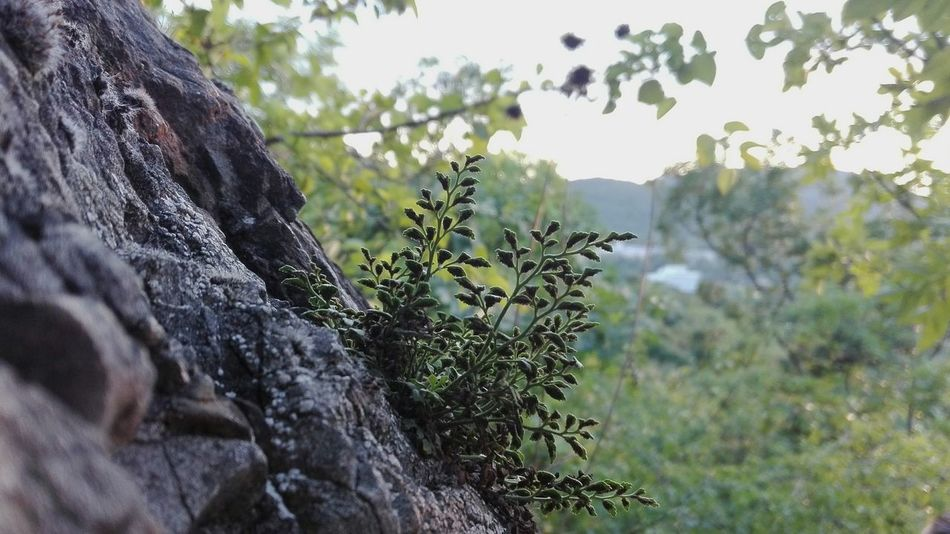 Nature Outdoors Plant Growth Day Close-up Tree Beauty In Nature Sky Freshness Rock Rock - Object