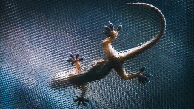 Lizard Animal Flip Reflaction