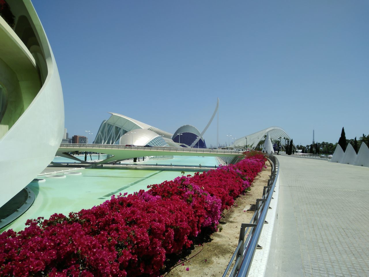 At the Theater in Valencia Alien Theater Architecture Bridge - Man Made Structure City Clear Sky Day Flower Modern Nature No People Outdoors Sky Theater Valencia Valencia Travel Valencia, Spain