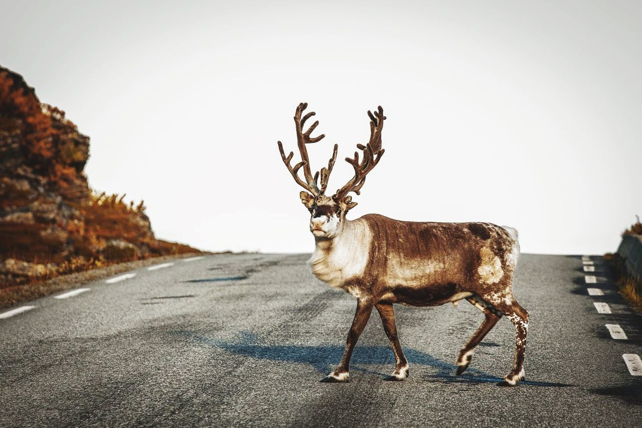 Beautiful stock photos of road, Animal Themes, Animals In The Wild, Day, Full Length