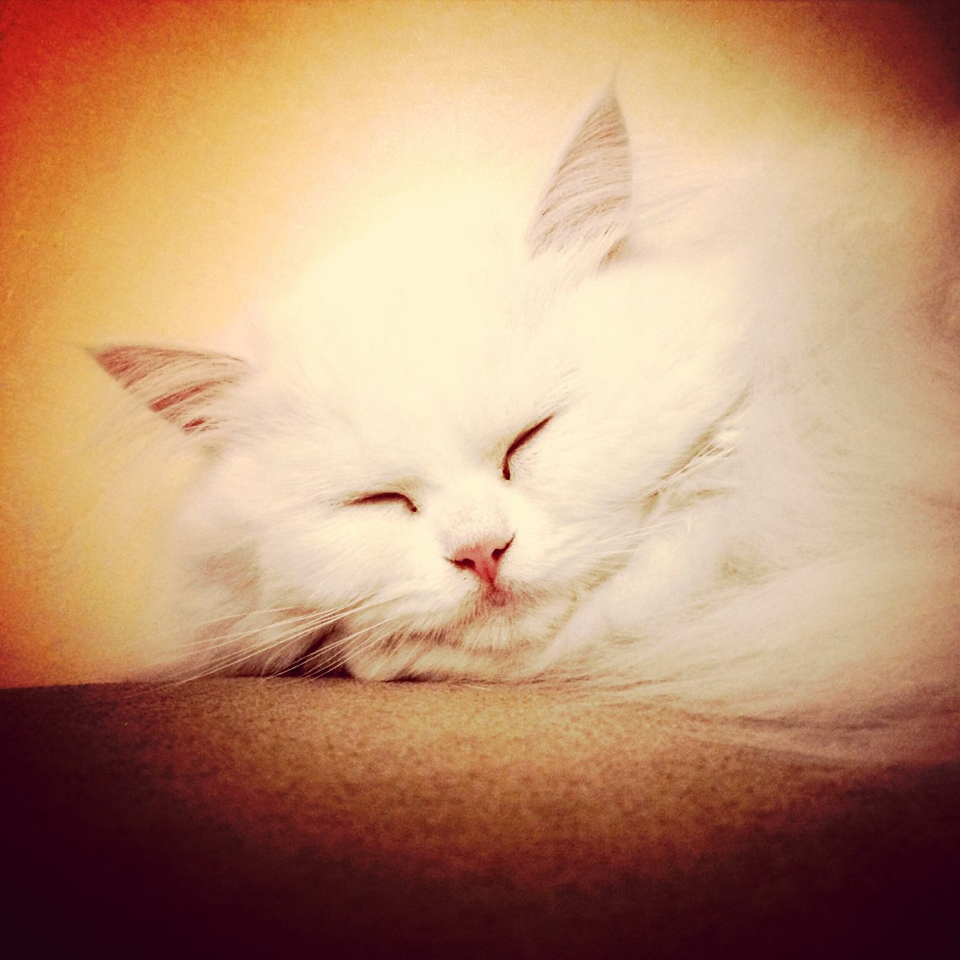 Kitty Cute Pets Pet Cat♡ Catsofinstagram Catsagram Catlovers