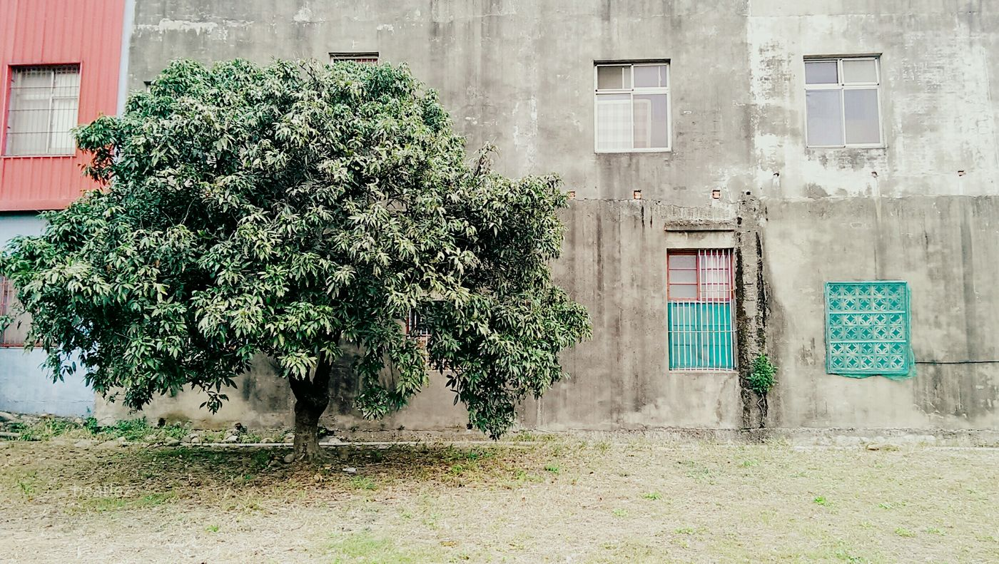 Enjoying Life Snapshot The View And The Spirit Of Taiwan 台灣景 台灣情 Hugging A Tree Tree_collection  Snapshots Of Life Old Windows