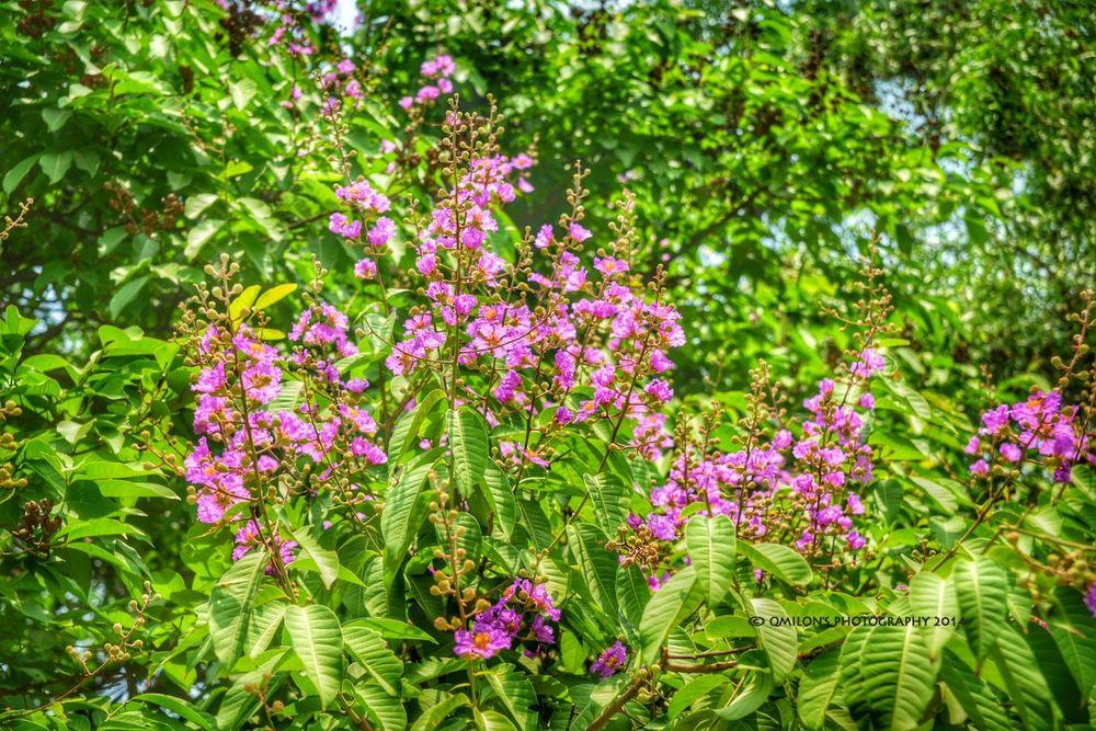 EyeEm Nature Lover HDR Collection Jarula Purple Flower