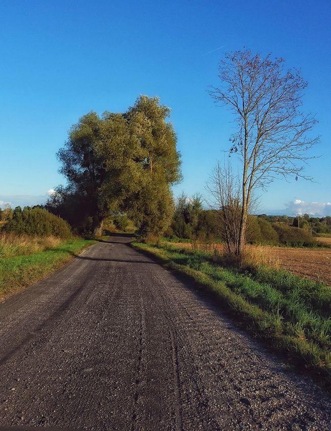 Road Tree Clear Sky Blue Transportation Road Grass Long Green Color Field Growth Day Empty Road Poland Polska Masuria Warmia Mazury