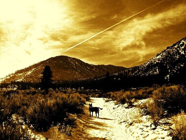 Tallac Best EyeEm Shot Landscape Abstract EyeEm Gallery Beautiful Sky Dogs Dog Ruben Sierra Soltitude Silhouette