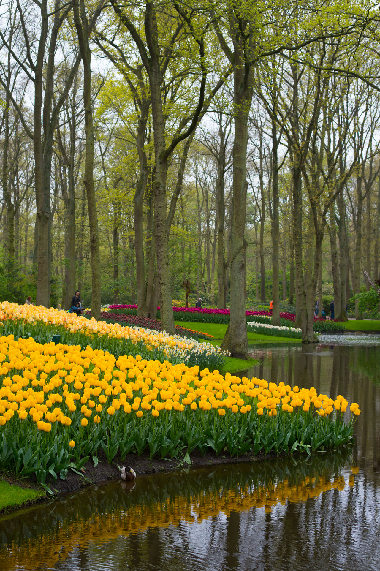 Beauty In Nature Day Flower Flower Head Flowerbed Fragility Freshness Growth Landscape Nature Neighborhood Map No People Outdoors Plant Scenics Springtime Tranquil Scene Tranquility Tree Water Yellow