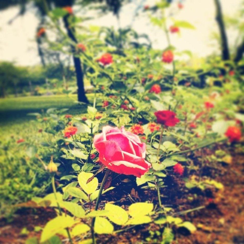 Morning Flower Embu