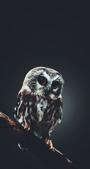 Owl Tumblr Awesome Awesome Performance Photography