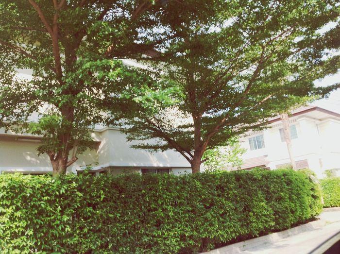 민미 Home Home Sweet Home Trees