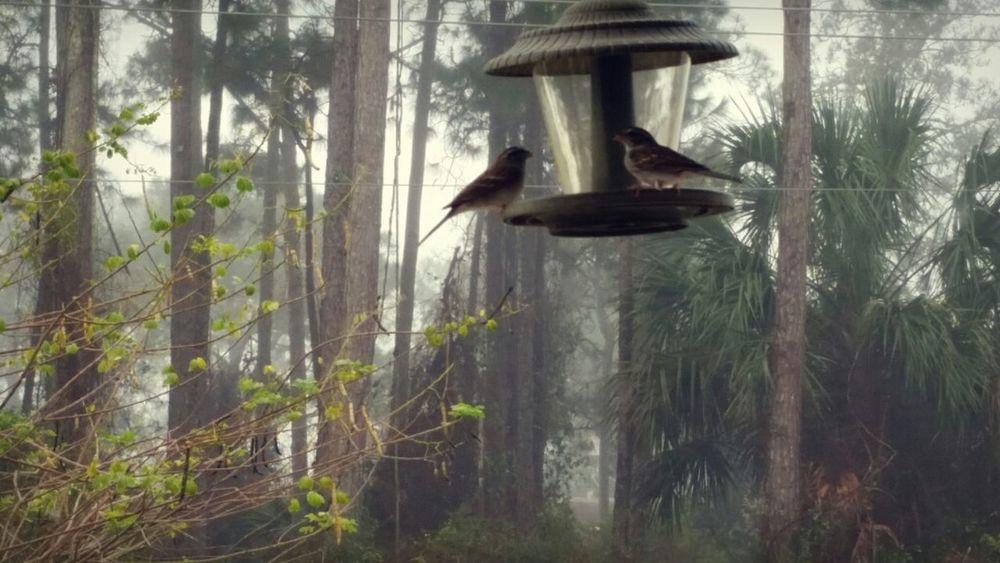 Foggy mornings... Wonder if they know it's empty? Birdseed Foggy Morning Birdwatching Birdwatcher Hungry Feedme Bird Photography EyeEm Birds