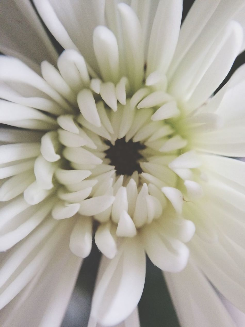 Beautiful stock photos of white, Auto Post Production Filter, Backgrounds, Close Up, Flower