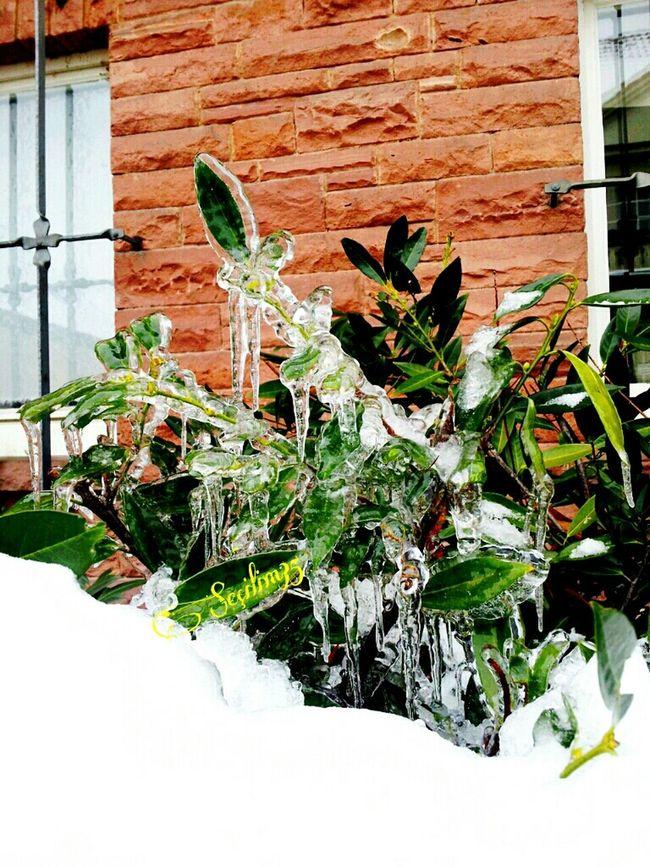 Bir Güne§ vursa çiçege duracakti filizler , ayni bizler gibi içten gelen bir tebessümün Selâmin tüm buzlari eritmesi gibi... Nature Green Winter Snow Enjoying Life Nature Makes Me Smile Nature_collection