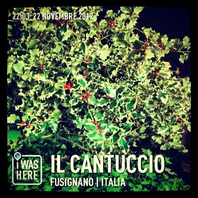 InstaPlace Instaplaceapp @instaplaceapp Place Earth World Italia Italy Fusignano Ilcantuccio Food Foodporn Restaurant Street Night