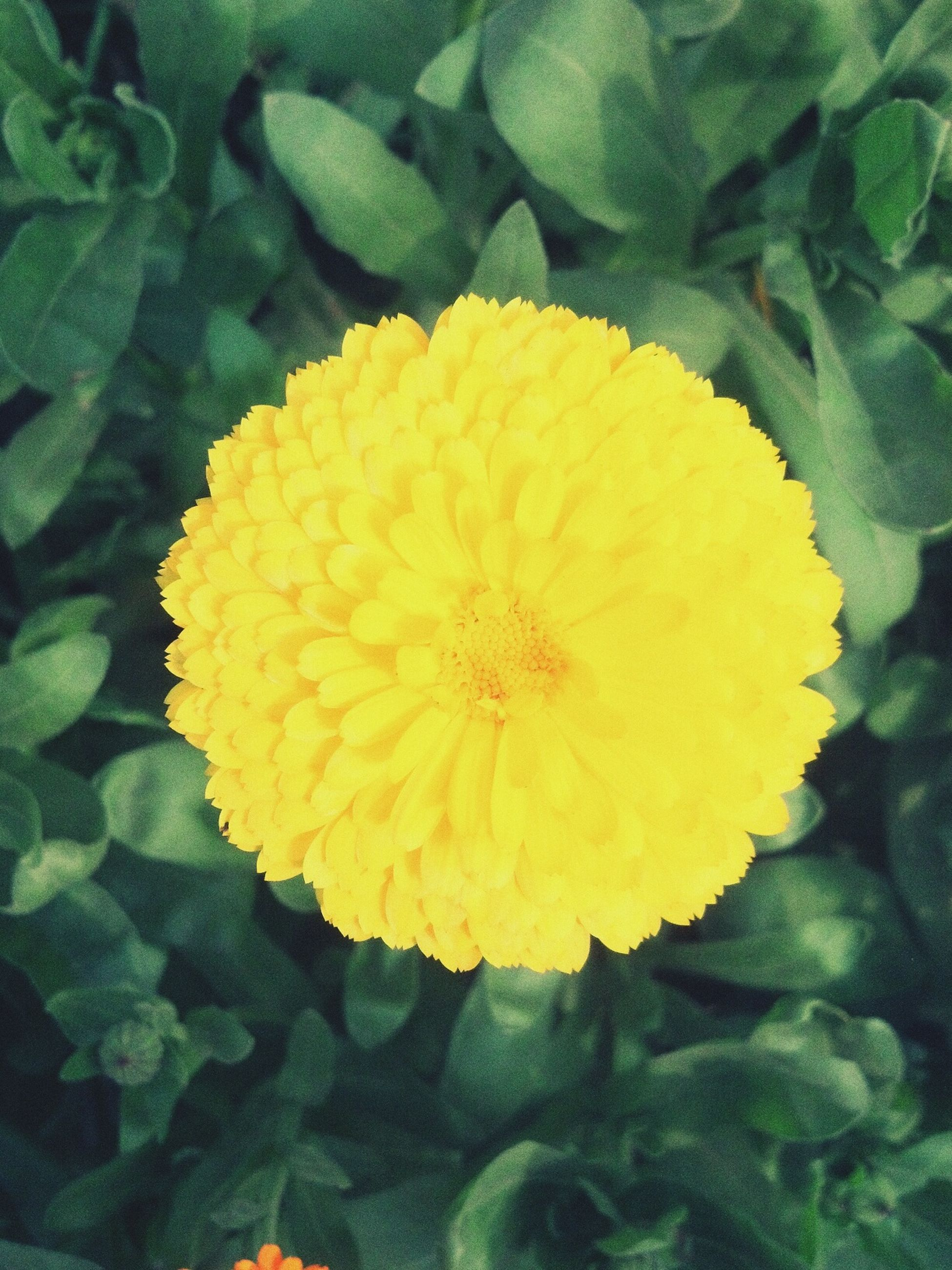 flower, freshness, yellow, flower head, fragility, petal, growth, beauty in nature, nature, single flower, close-up, plant, blooming, leaf, high angle view, in bloom, green color, blossom, pollen, outdoors