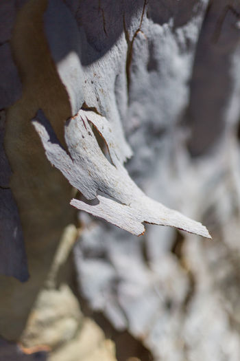 tree barks peeled Barks Of A Tree Barks Peeling Close-up Day Full Frame Nature No People Outdoors Park Park - Man Made Space Shaded Shadows Shallow Depth Of Field Tree