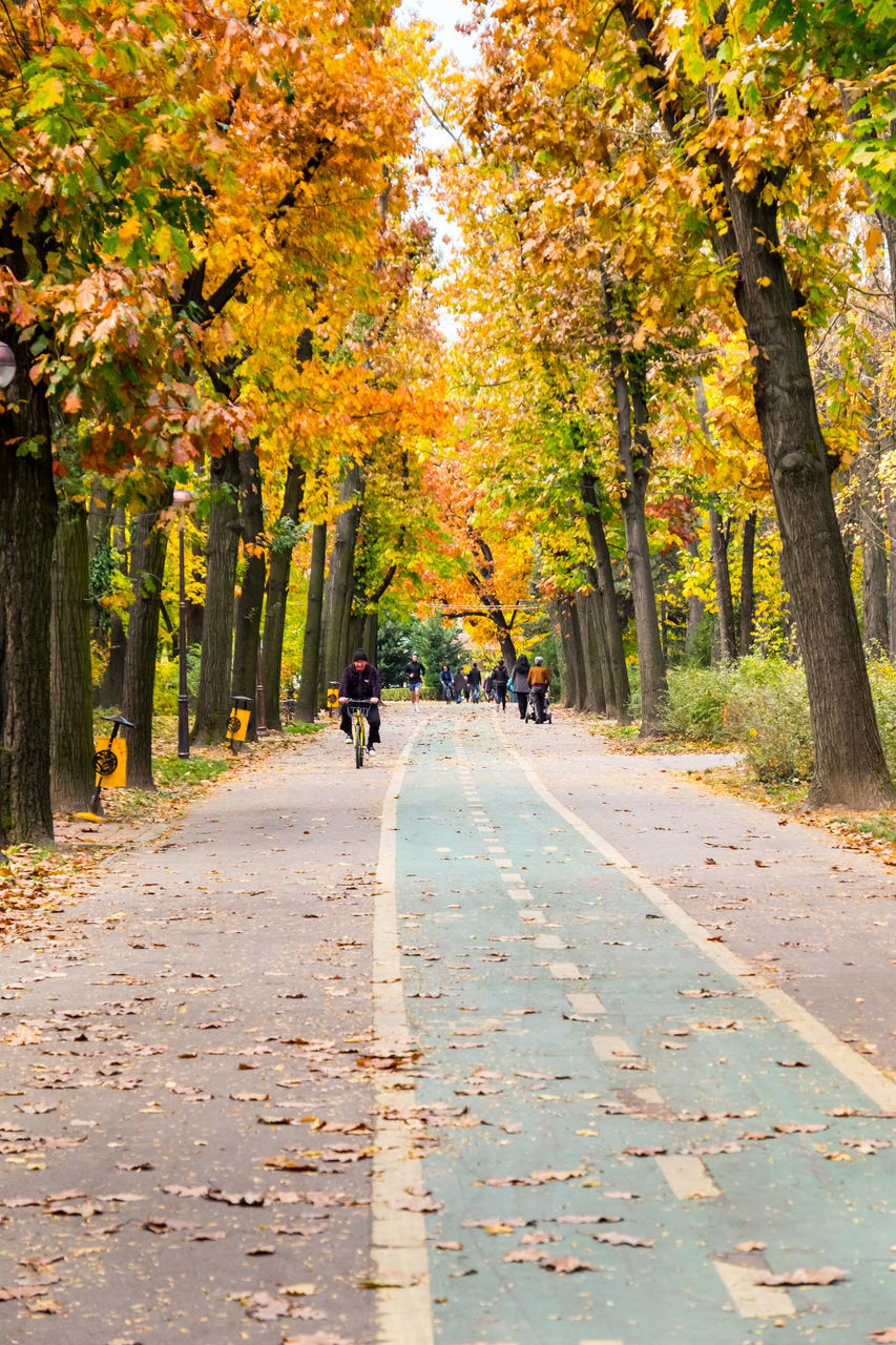 autumn, tree, leaf, nature, change, road, walking, outdoors, scenics, the way forward, beauty in nature, full length, day, people, one person