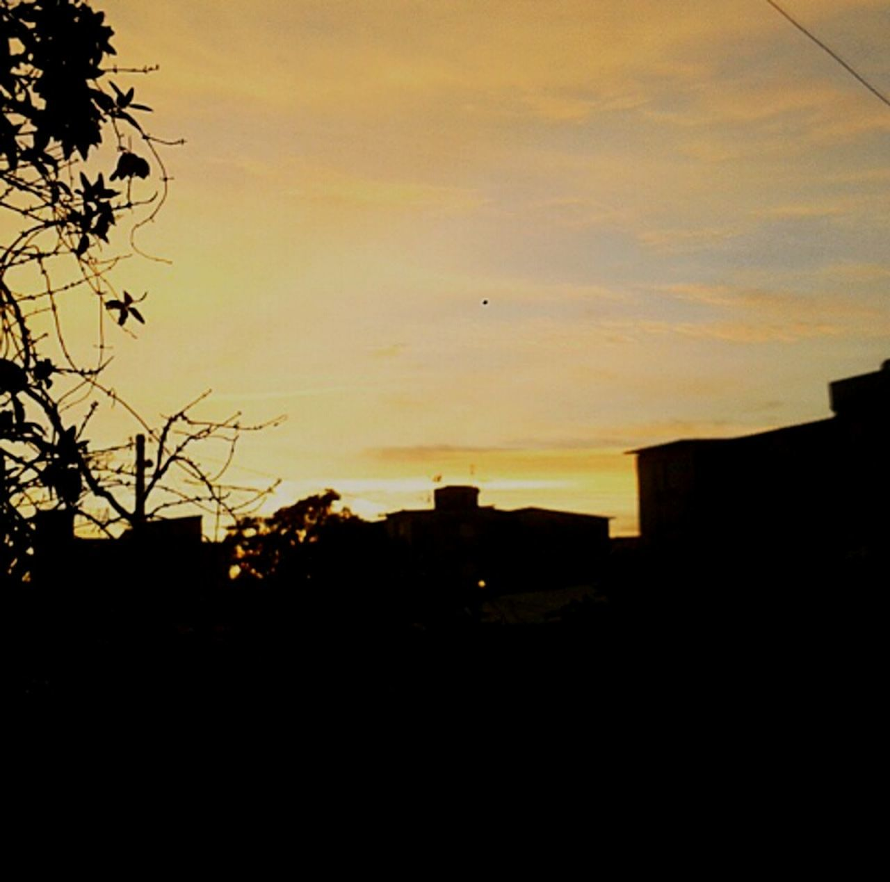 silhouette, sunset, no people, bird, flying, sky, nature, tree, architecture, building exterior, outdoors, beauty in nature