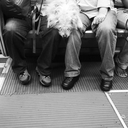 Cutie puppy dog with their moms on MUNI Dogs People Watching Monochrome Black And White Streetphoto_bw Street Photography