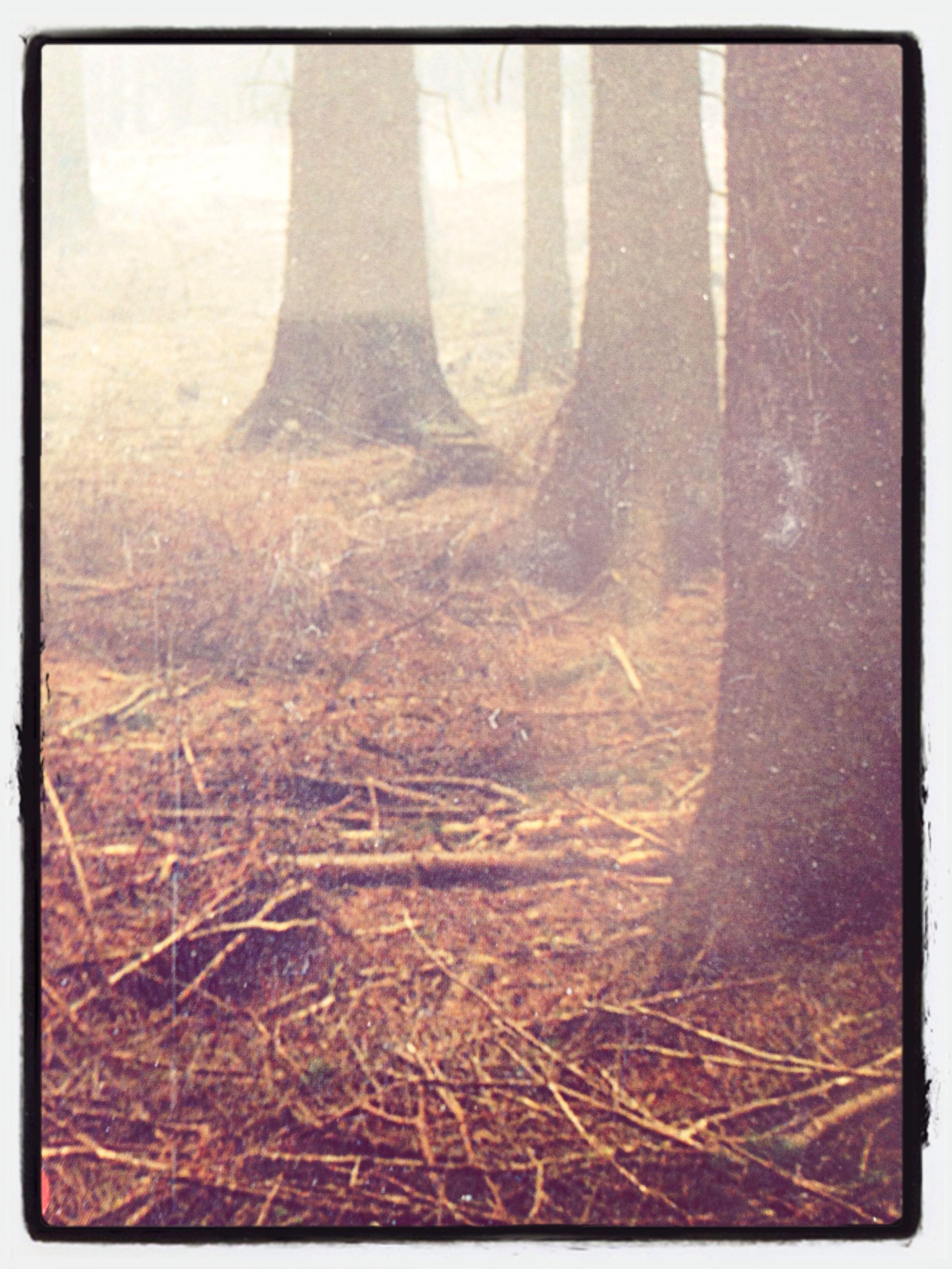 Im Schreibwald. First Eyeem Photo