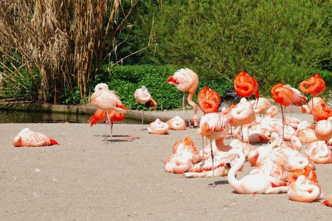 Animals Zoo Wildlife Mothernature