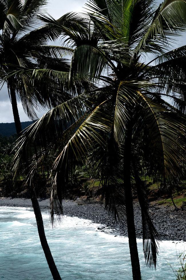 Africa Atlantic Beach Island Island Life Island Living Ocean Outdoors Palm Palm Tree Palm Trees Paradise Sao Tome Sea Travel Travelling Tropical