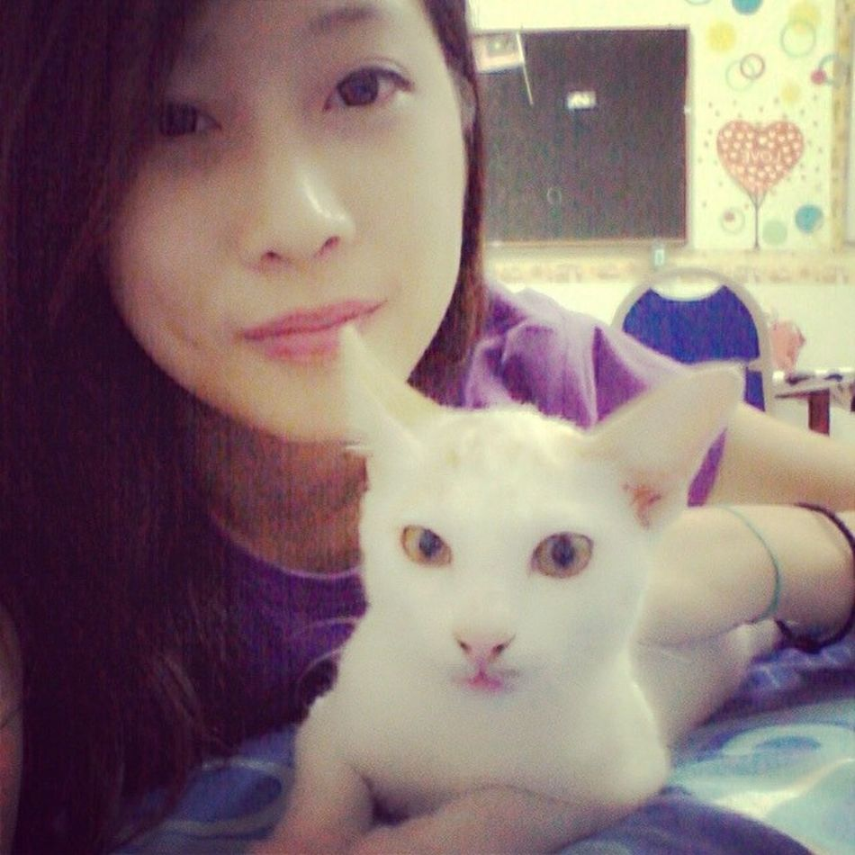 C rabbit sudi kawankan saya tidur malam ni.. =^.^= meow.. Meow.. Meow.. Cat Adorable Blokdahlia