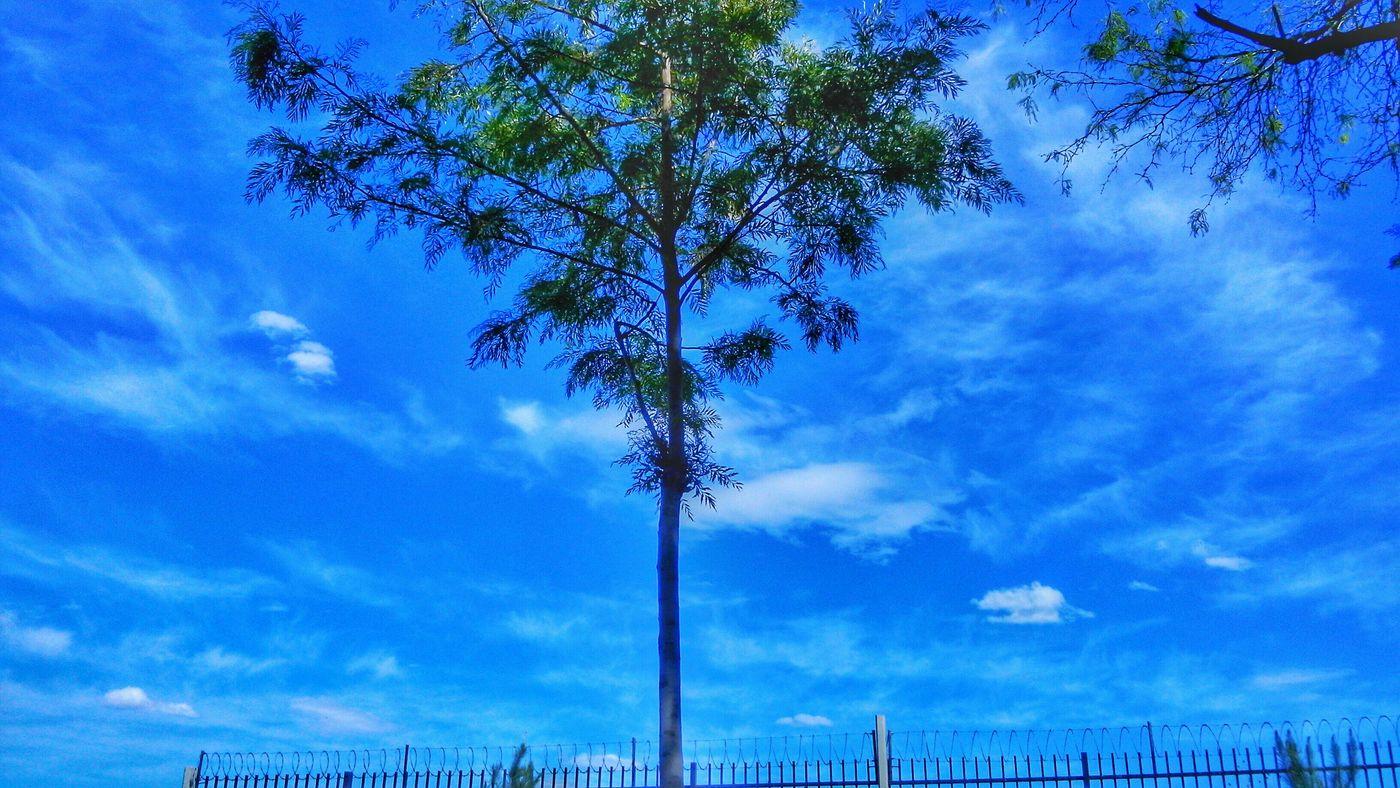 Trees Green Blue Sky Taking Photos Shoot Macro Arboles Relaxing Photography