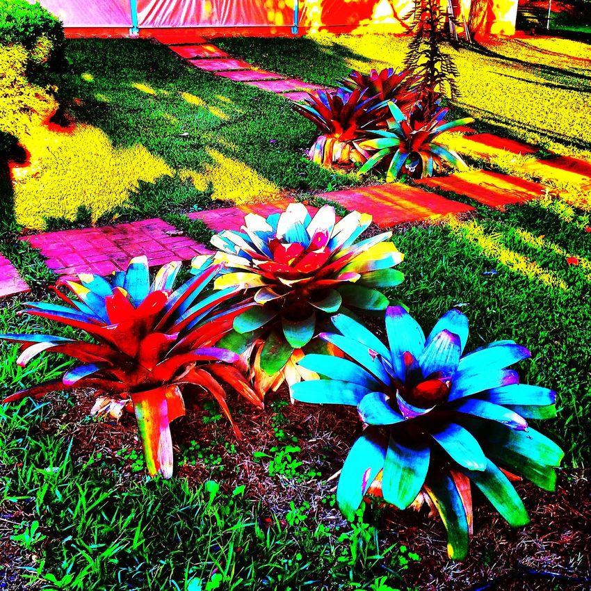 Avaré SP BRASIL 🇧🇷 Photography Golden Hour EyeEm EyeEm Gallery Getting Creative EyeEmBestPics EyeEm Best Shots Hdr_Collection Night Lights Bokeh Starry Sky Light & Shadow EyeEm Best Shots - Nature