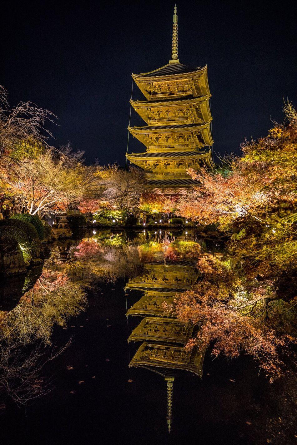 京都 紅葉 東寺 寺 ライトアップ Kyoto Autumn Leaves Night Lights Japan Temple Reflection 反射 五重の塔 五重塔 Tower