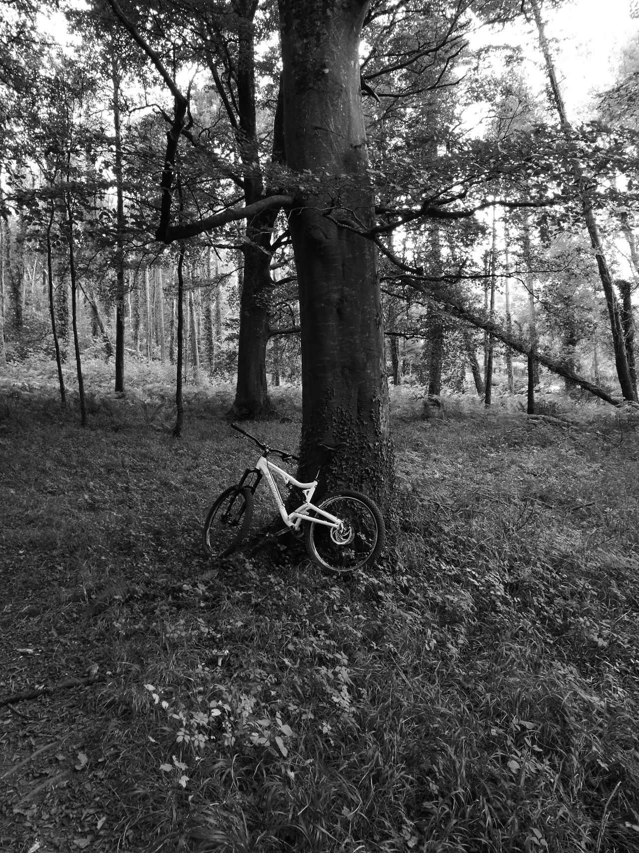Tree Forest WoodLand Glade Wilderness Outdoors Solitude Nature Tranquil Scene Trail MTB Biking Dromoland Mooghaun Woods Fairyforest