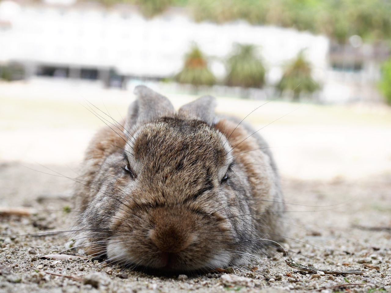 Nature Photography Nature Nature_collection Rabbit ❤️ Beauty In Nature Animal Rabbits Rabbits 🐇 Pretty Animal Wildlife Animal_collection Animal Photography Animal Themes Rabbit Animals Animals In The Wild Sleep Sleeping Sleepy