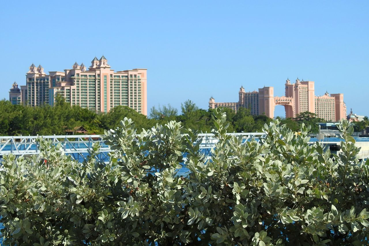 Through The Bushes Palm Trees Architecture Building Exterior Man Made Structure Atlantis Hotel Paradise Island Bahamas Port Of Nassau Pier View From A Distance Photography