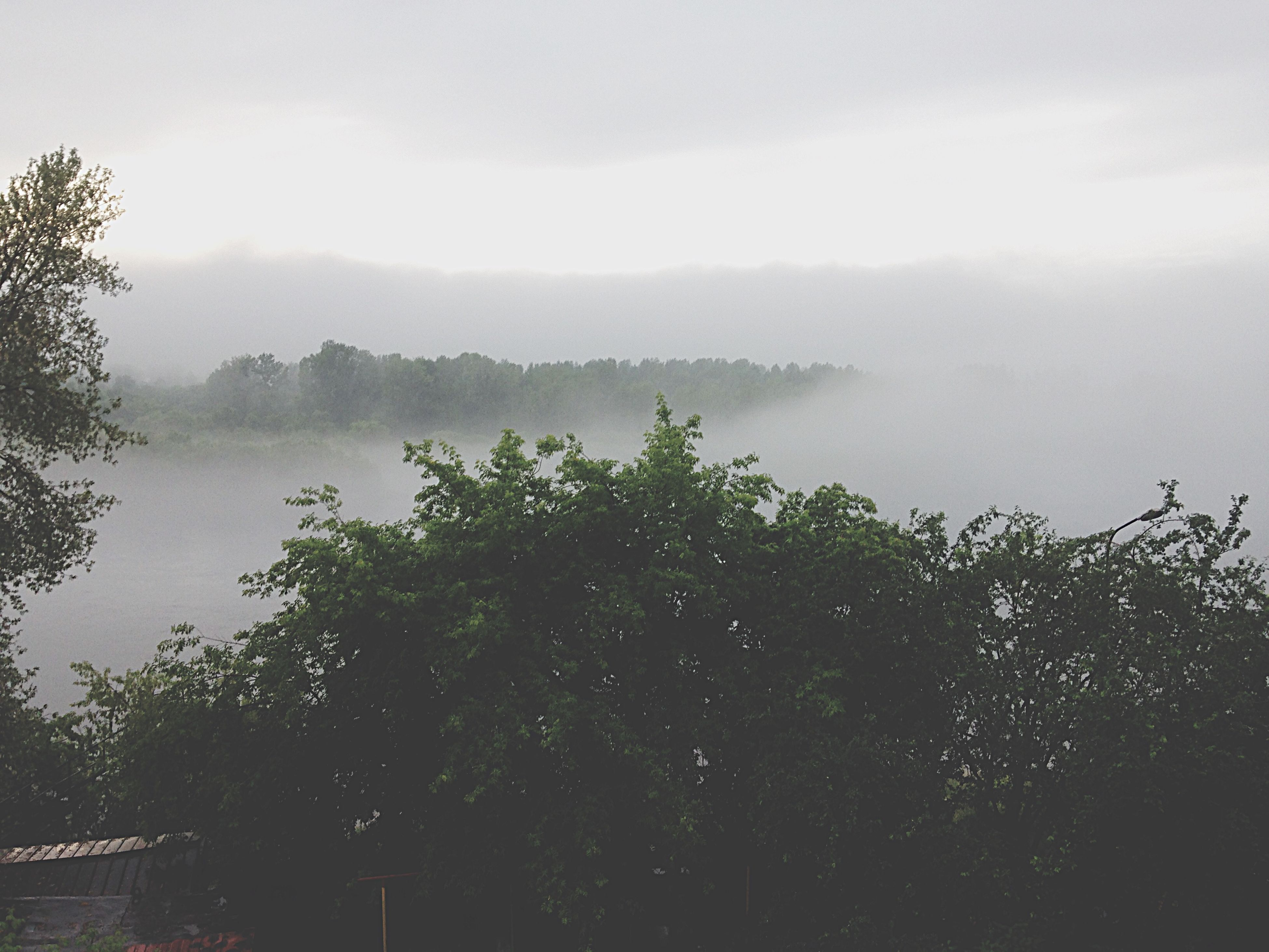 tree, sky, tranquil scene, tranquility, scenics, beauty in nature, growth, nature, fog, mountain, landscape, cloud - sky, plant, idyllic, non-urban scene, foggy, day, outdoors, water, weather