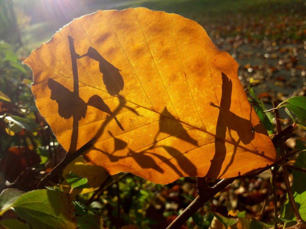 Autumn Colors Autumn Outdoors Nature Plant Close-up Beautiful Day Sunlight Atumn Is Here ... Fall Mood!