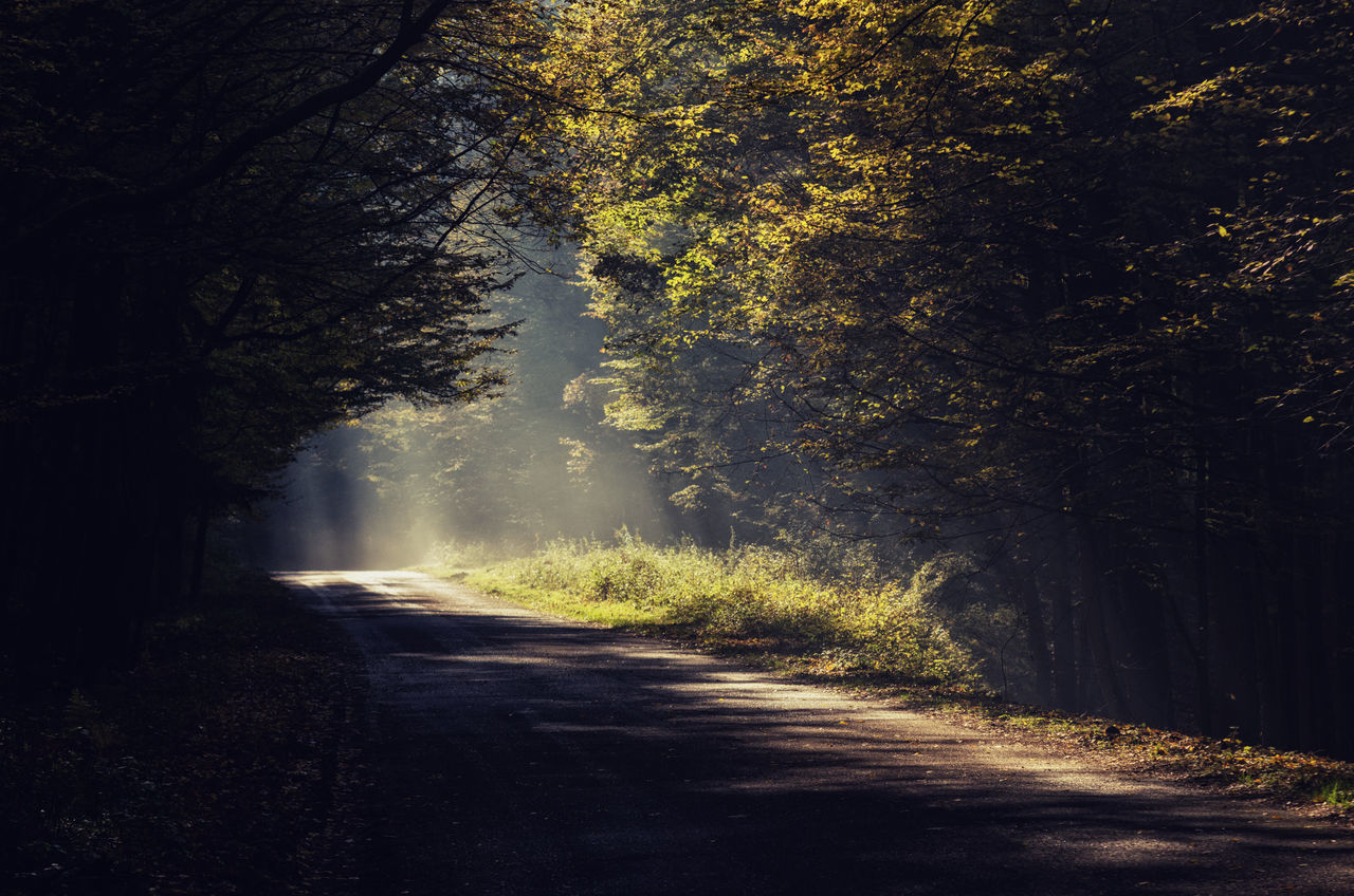 Emtpy road in a dark forest lit up with sunlight Dark Forest Dark Forest Road Empty Road Foggy Foggy Road Forest Forever Fotografia Light Up The Room Lit Up With Lights Mist Misty Forest Morning Road Nature No People Outdoors Road Road In Forest Road In The Forest Road, Sun Sunlight, Shades And Shadows Tree
