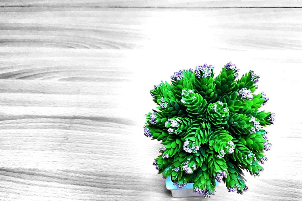 green thing Rule Of Thirds Tryinghardphotographer Colorsplash