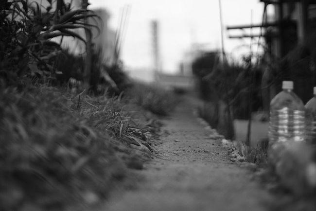 Black And White モノクロ Monochrome EyeEm Bnw Japan Photography