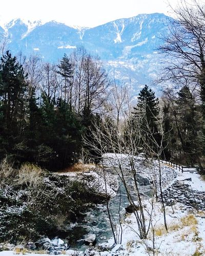 Snow Winter Cold Temperature Nature Tree Beauty In Nature Landscape Mountain Scenics Bare Tree Tranquil Scene Mountain Range Outdoors Forest Tranquility No People Day