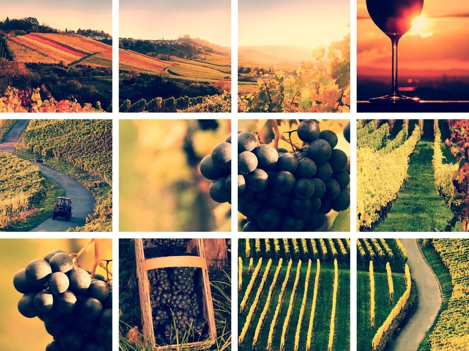 wine collage vintage style Autumn Backgrounds Collage Colorful Drinks EyeEm Gallery Field Grapes Landscape Landscapes With WhiteWall Montage Montage Photography Nature No People Outdoor Pictures Photo Montage Riesling Sepia Summer Vineyard Vintage Wine Wine Farm Wineglass Winery