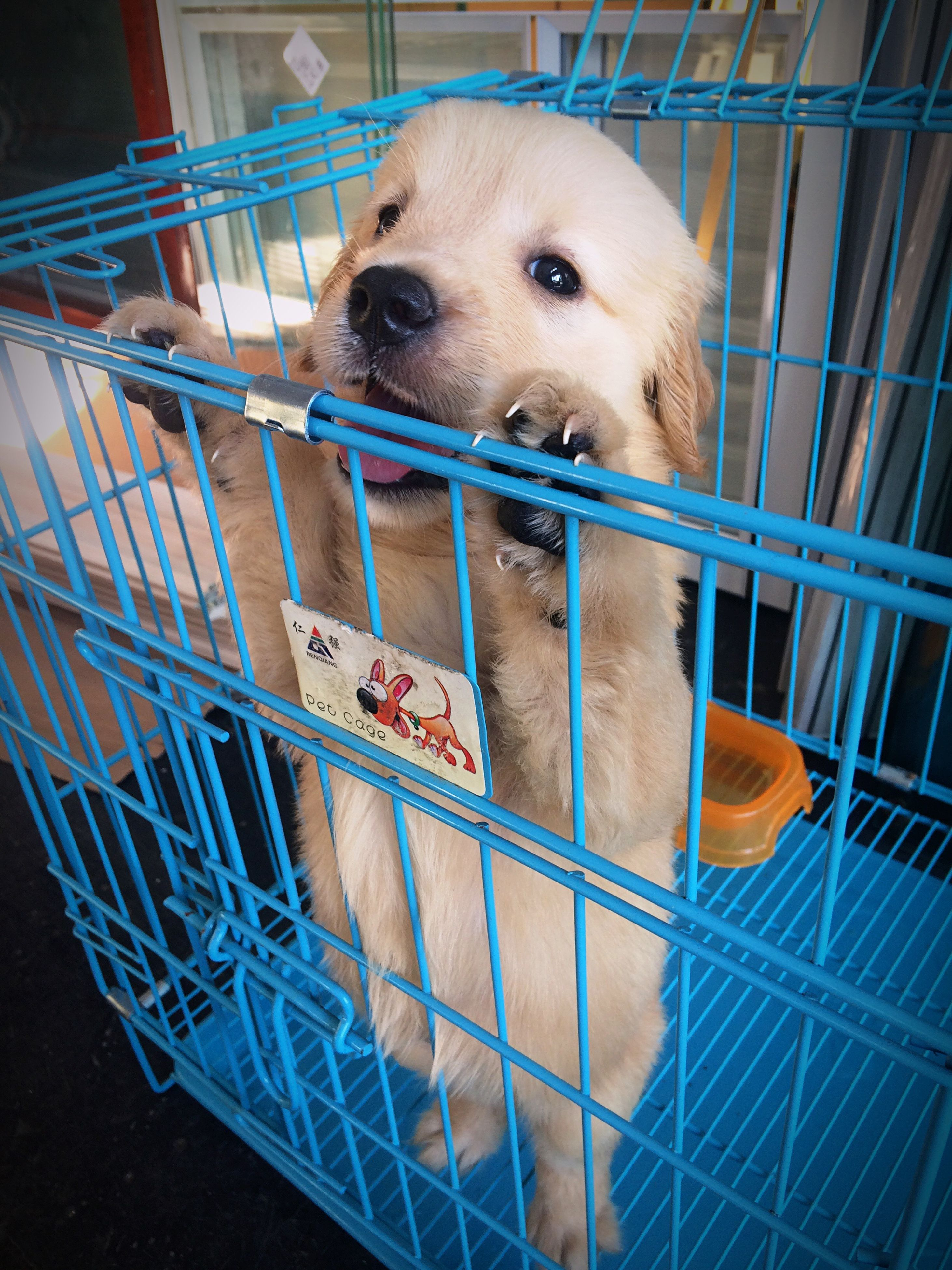 animal themes, one animal, dog, domestic animals, pets, cage, close-up, mammal, animal head, blue, day, no people