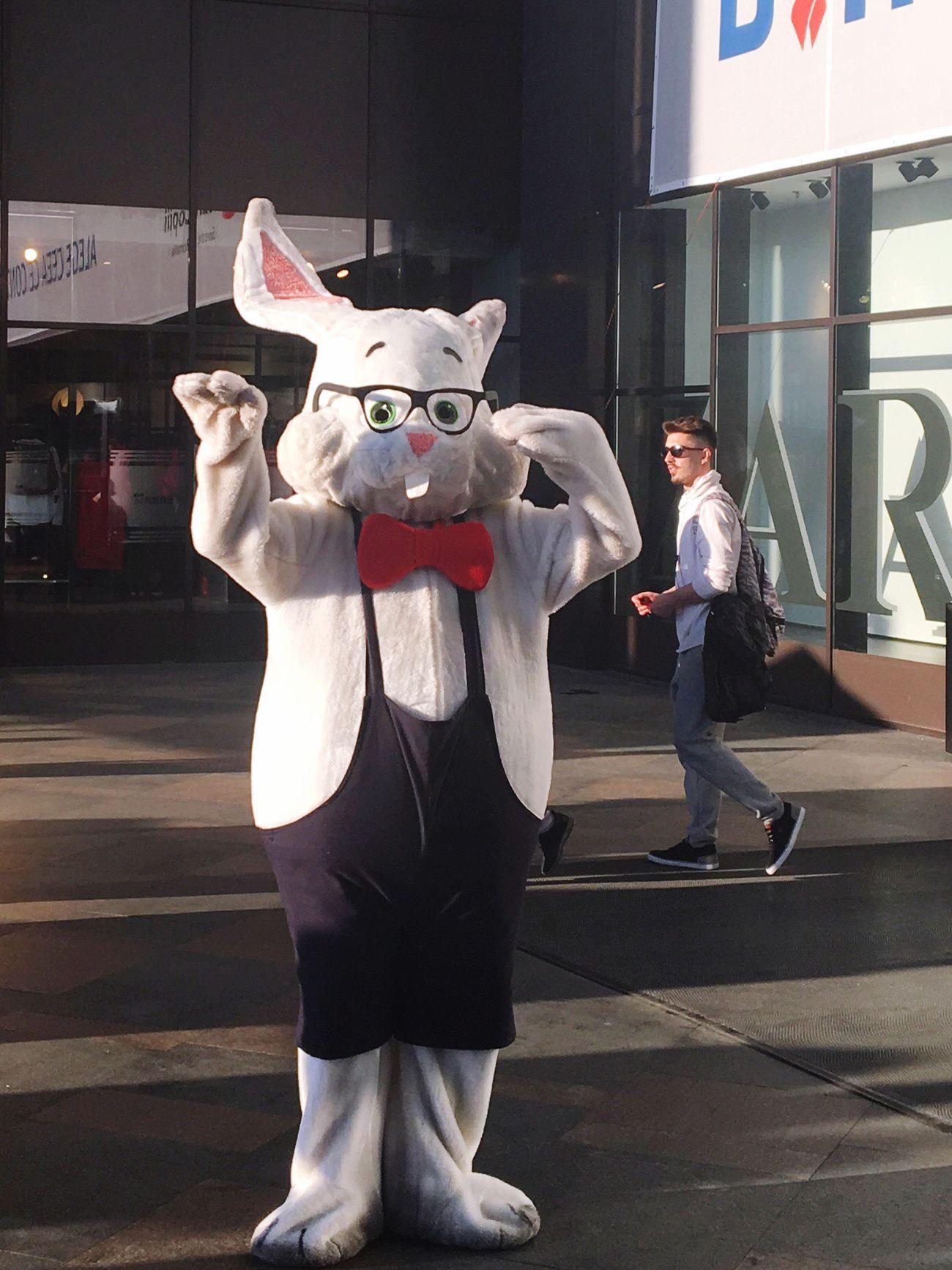 Mr Rabbit 🐰🐇