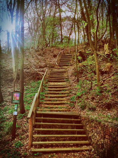 Eyem Stairways Pastel Power My Smartphone Life Mobilephotography Nature_collection Sunlight Spring Spring Into Spring Trees Naturelovers