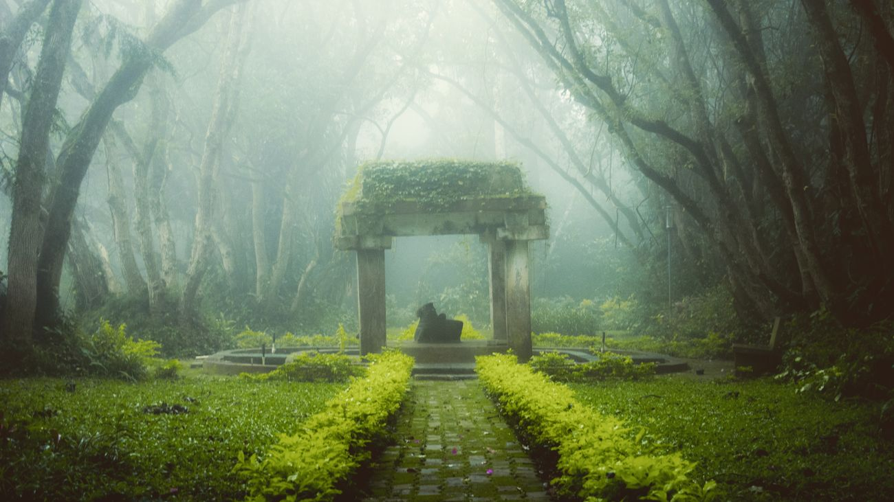 Foggy Morning Fog Treescape Bull Nandi @ Nandi Hills Bangalore