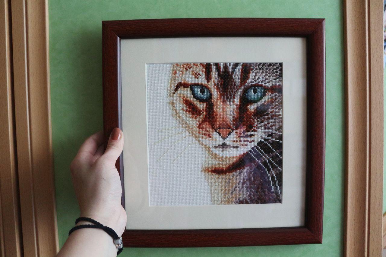 Мой Кот по имени Доктор. хобби вышивка вышивкакрестиком Hobby Handmade Cross-stitch