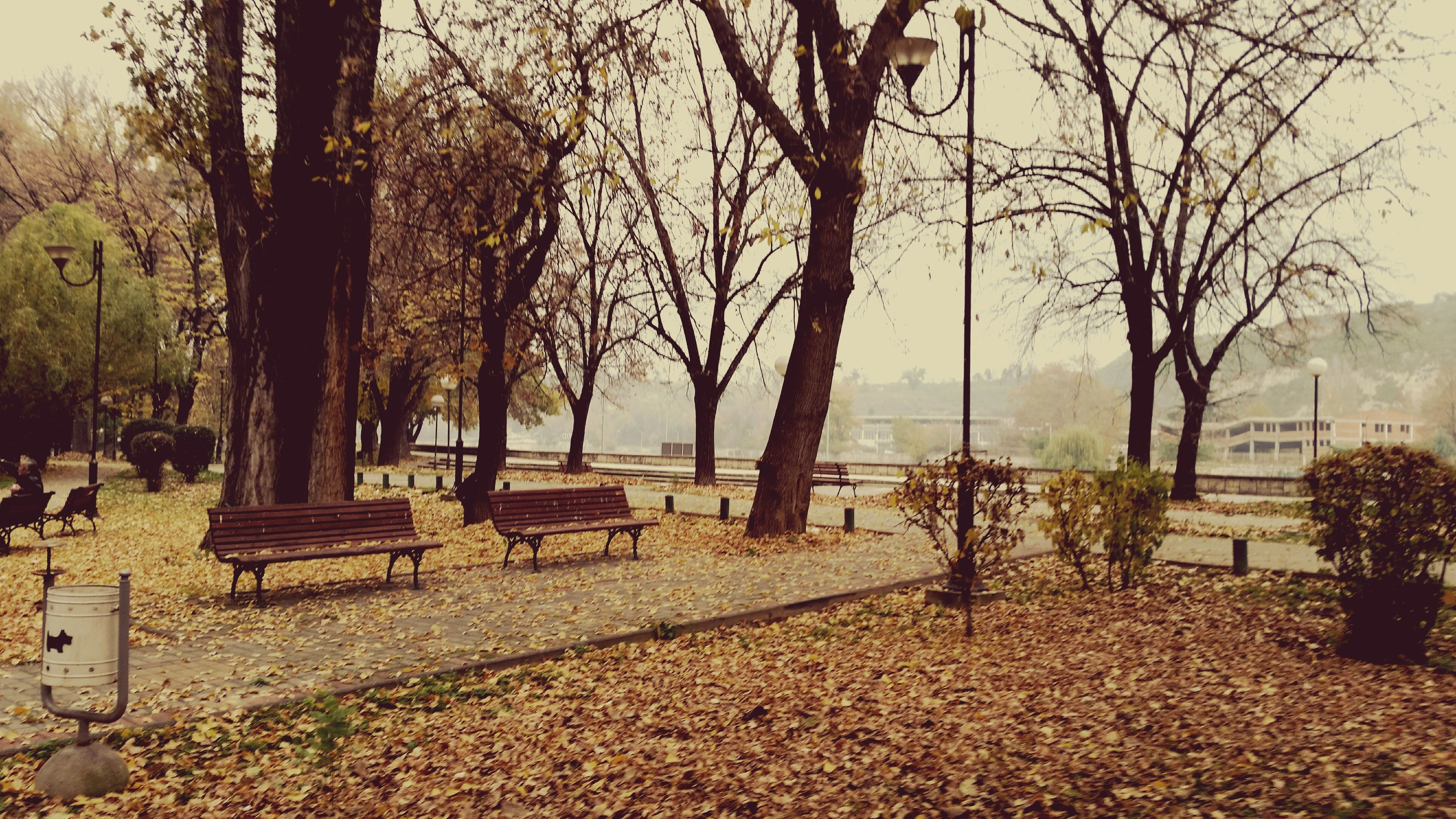 tree, bench, tree trunk, tranquility, tranquil scene, branch, nature, park - man made space, bare tree, scenics, water, growth, absence, park bench, empty, day, beauty in nature, sky, relaxation, chair
