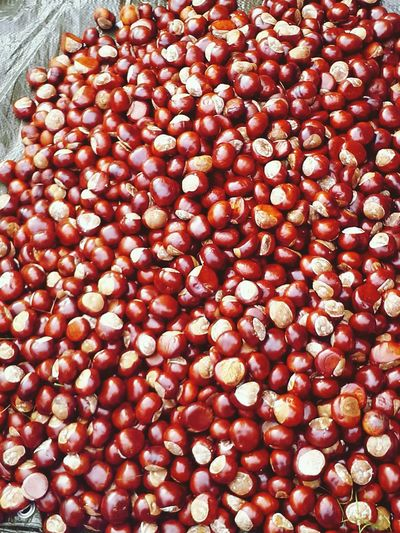 Herbst Kastanien Zwanzig15