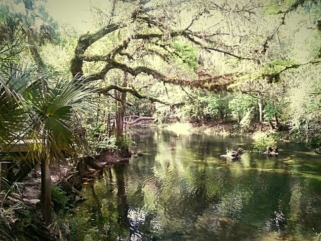 Hillsborough River. Getting In Touch Hugging A Tree Nature_collection EyeEm Nature Lover